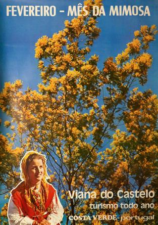 Cartaz Fevereiro - Mês da Mimosa. Viana do Castelo turismo todo ano. Costa Verde - Portugal