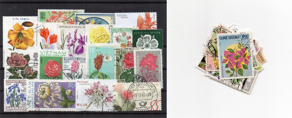 50 selos diferentes de flores