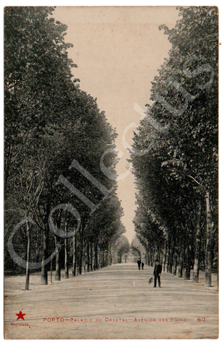 Postal antigo do Porto – Palácio de Cristal – Avenida das Tílias. Edição Estrela Vermelha