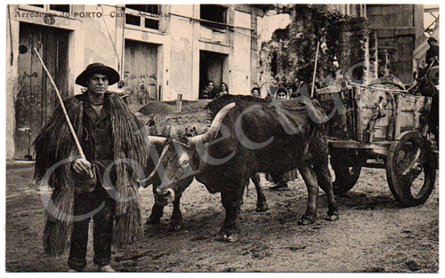Postal antigo Arredores do Porto –Carro de bois