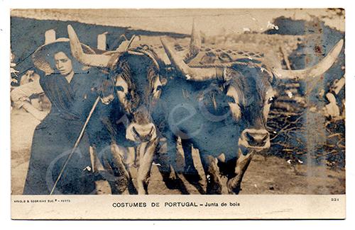 Postal antigo de costumes portugueses com uma junta de bois